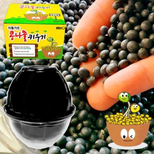 콩나물키우기 키트 재배기 가정용콩나물 - 국내산