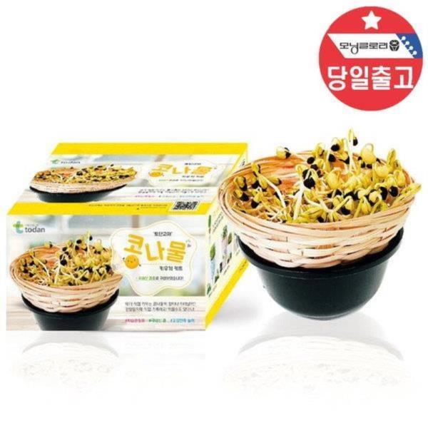 국산 콩나물 키우기 - 1인세트 씨앗 기르기 관찰학습
