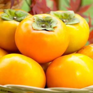 감 단감 고당도 가정용 가을 과일 차량단감 당도 제철 햇단감 5kg 대(19과 내외) 선물용단감
