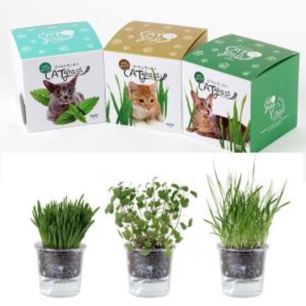 반려묘 고양이풀 식물 재배 귀리/밀/캣잎