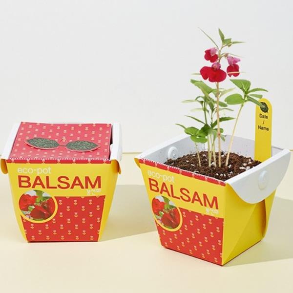 키우기쉬운식물 미니 페이퍼화분 씨앗세트 봉선화
