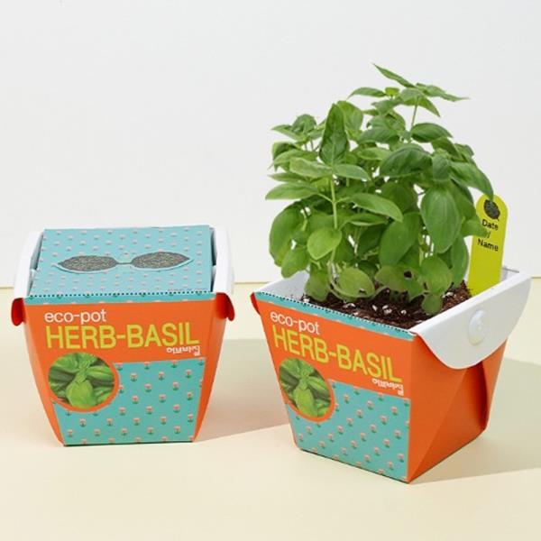 키우기쉬운식물 미니 페이퍼화분 씨앗세트 허브바질