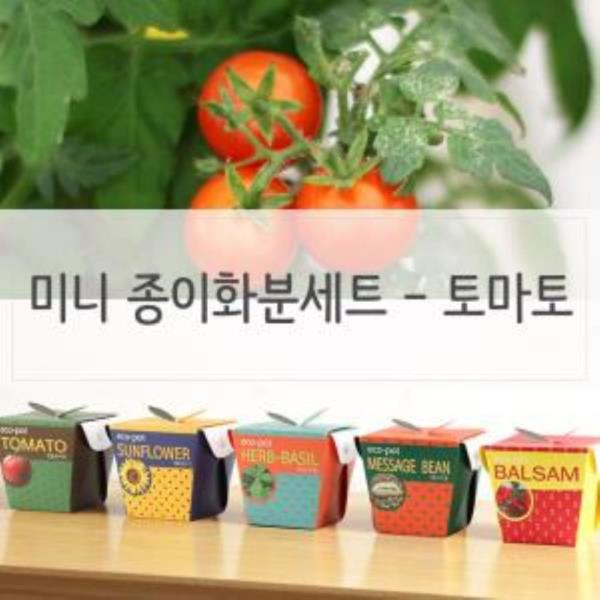 키우기쉬운식물 미니 페이퍼화분 씨앗세트 토마토