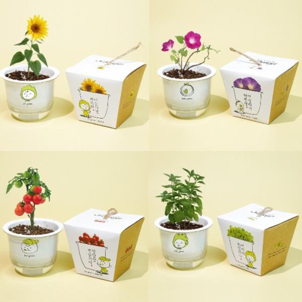 키우기쉬운식물 싹이나는 화분재배 키트