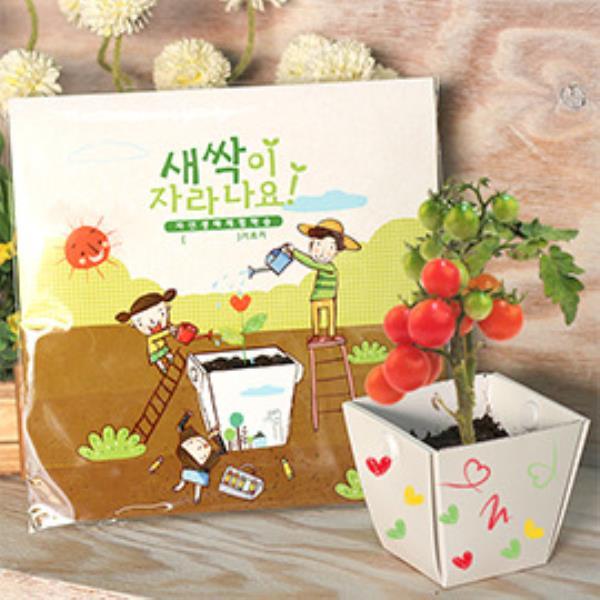 키우기쉬운식물 식물재배 학습관찰용 세트