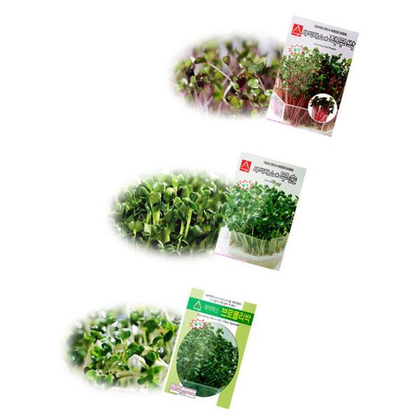 키우기쉬운식물 새싹 채소씨앗 2종