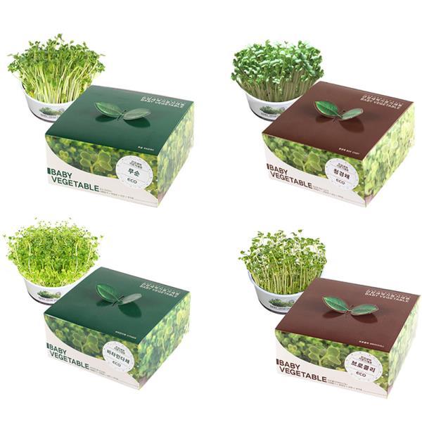 키우기쉬운식물 새싹재배세트