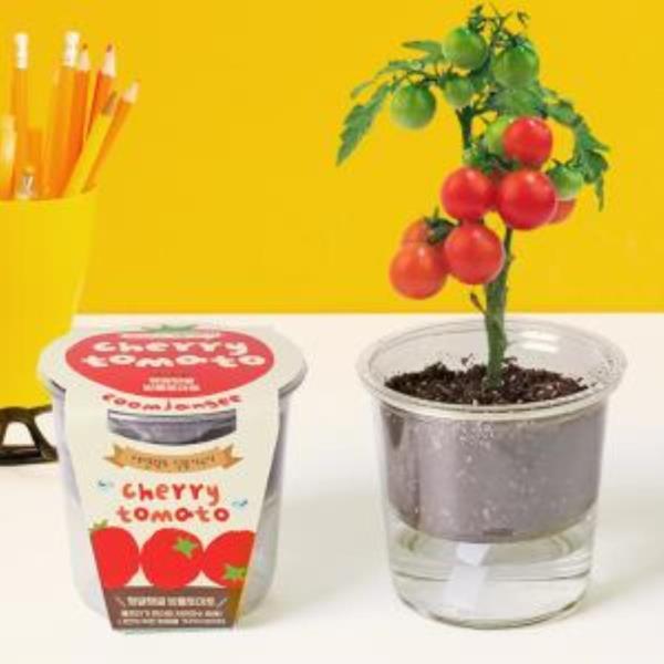 집에서할수있는취미 방울토마토 화분키우기 세트