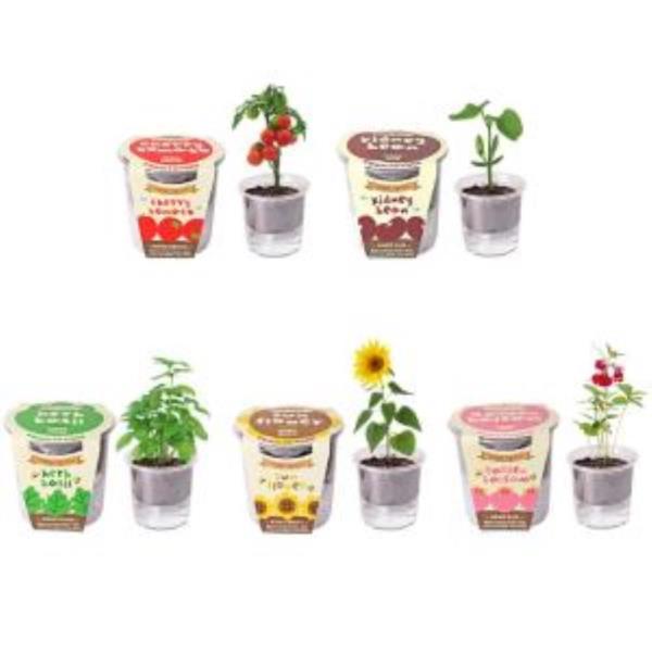 집에서할수있는취미 식물키우기 5종 세트