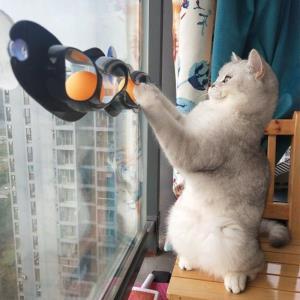 고양이 장난감 트랙앤롤