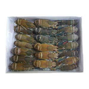 자연산 비늘돔 패럿피쉬 1마리(1.5-2kg) 손질냉동생선