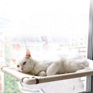 고양이 창문해먹 유리 베란다 초강력 흡착 하중18kg